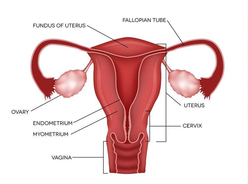 جراحی اندومتریوز زنان